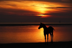 horse-silhouette-at-sunset-152601758016u