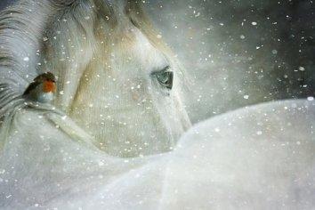 winter-wonderland-3821445__340